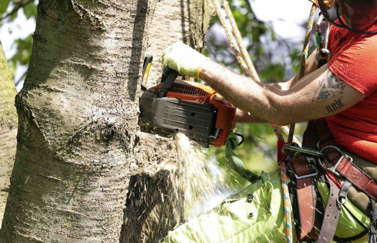 tree surgery and forestry